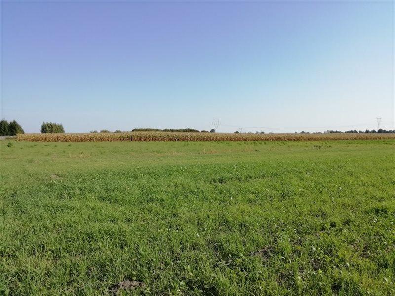 Działka rolna na sprzedaż Komorów  3000m2 Foto 4