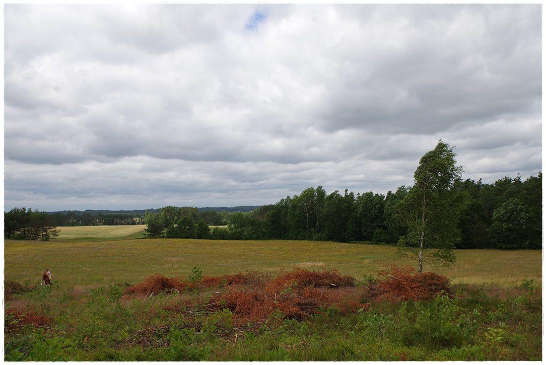 Działka rolna na sprzedaż Linia, Dębowa  12607m2 Foto 5