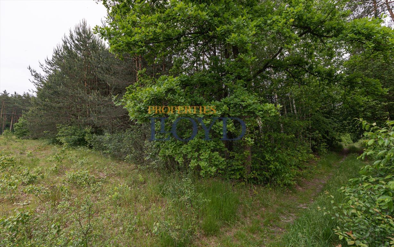 Działka rolna na sprzedaż Kociołki, Kociołki  3229m2 Foto 5