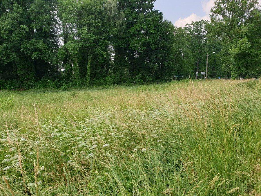 Działka rolna pod dzierżawę Chojna  2013m2 Foto 9
