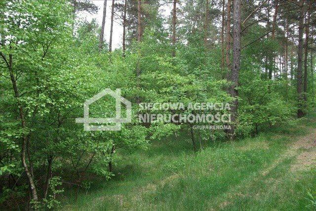 Działka leśna na sprzedaż Czarniż  44100m2 Foto 6