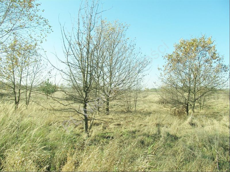 Działka rolna na sprzedaż Tyborów  4591m2 Foto 4