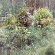Działka leśna z prawem budowy na sprzedaż Lasek  13770m2 Foto 5