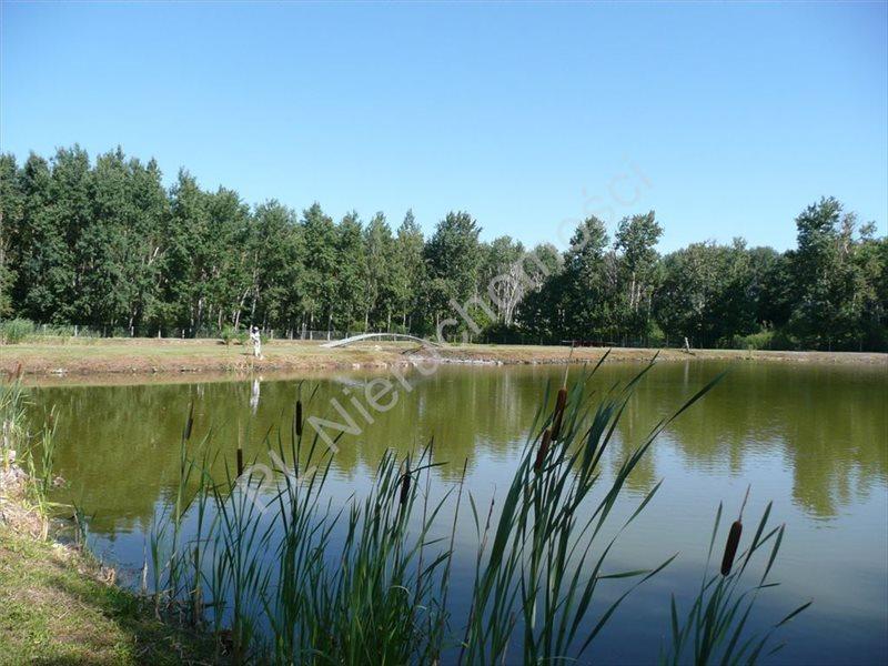 Działka rolna na sprzedaż Zimnice  20156m2 Foto 5