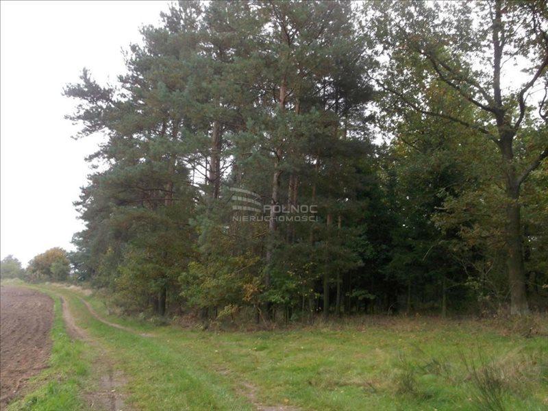 Działka leśna na sprzedaż Bolesławiec, Zabobrze  21908m2 Foto 2