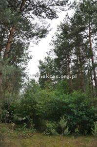 Działka leśna na sprzedaż Różan  13047m2 Foto 1