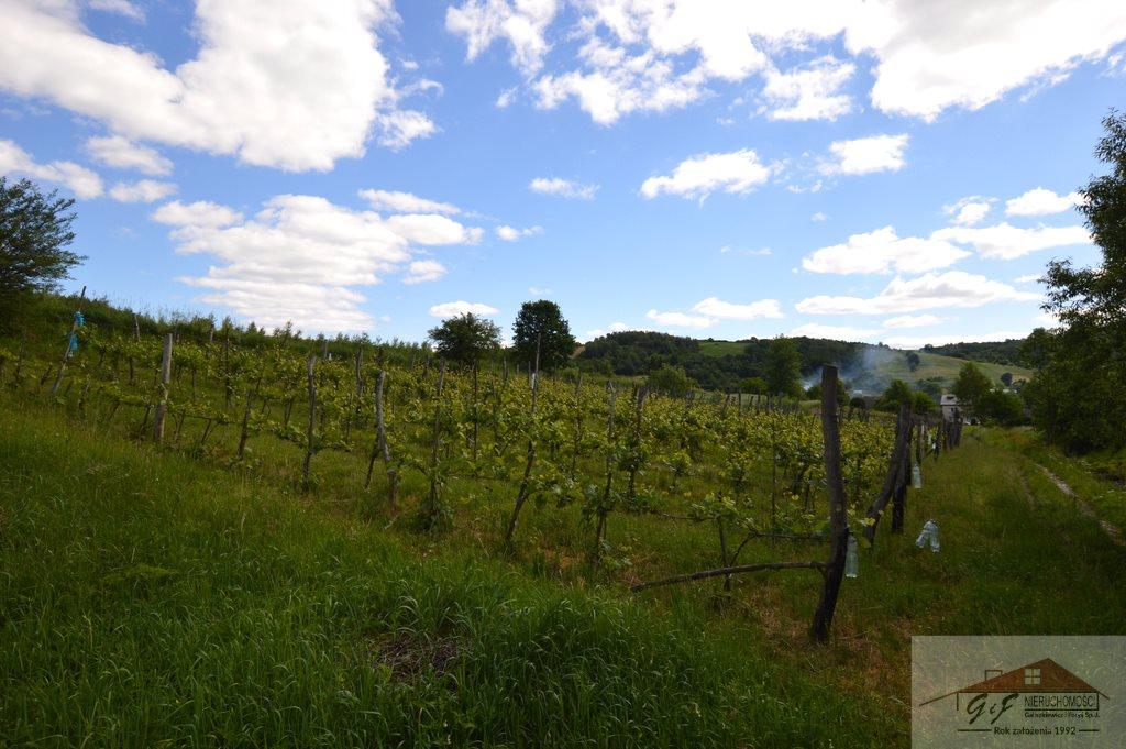 Działka rolna na sprzedaż Węgierka  11700m2 Foto 5