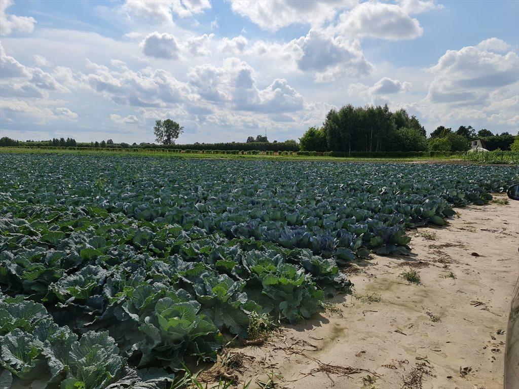 Działka rolna na sprzedaż Piorunów  3089m2 Foto 2
