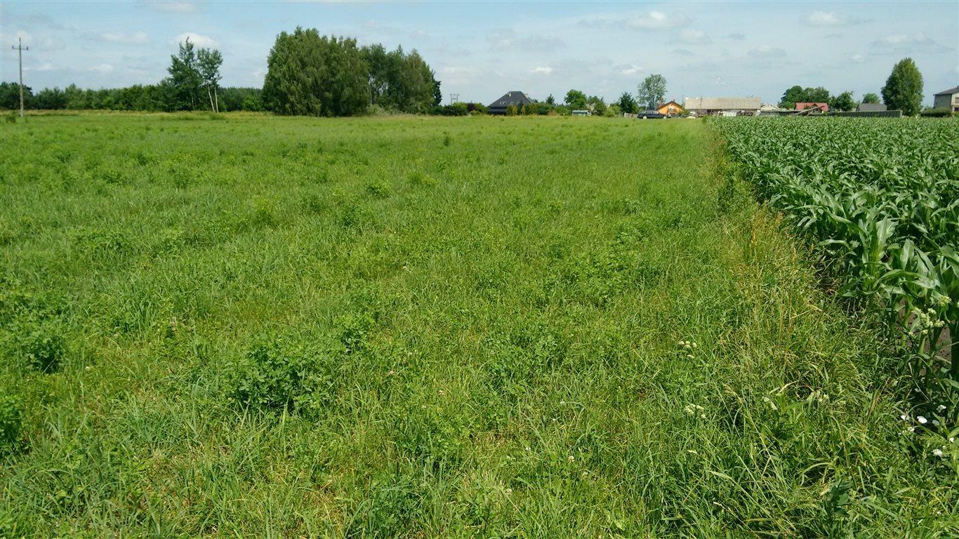 Działka rolna na sprzedaż Komorów  3000m2 Foto 1