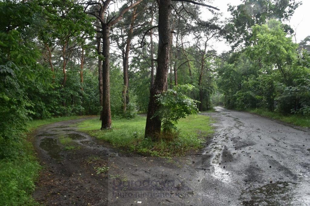 Działka leśna z prawem budowy na sprzedaż Józefów  1500m2 Foto 1
