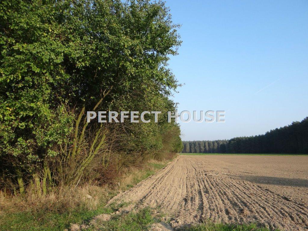Działka rolna na sprzedaż Daszewice  9900m2 Foto 2