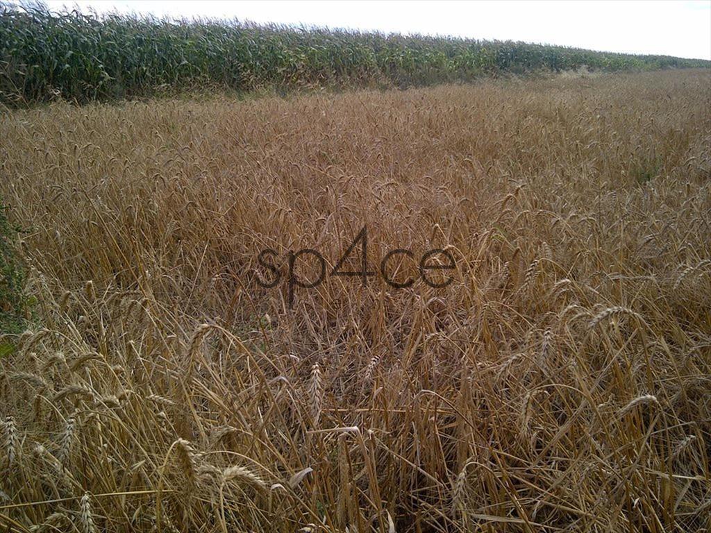 Działka rolna na sprzedaż Lidzbark Warmiński  7000000m2 Foto 9
