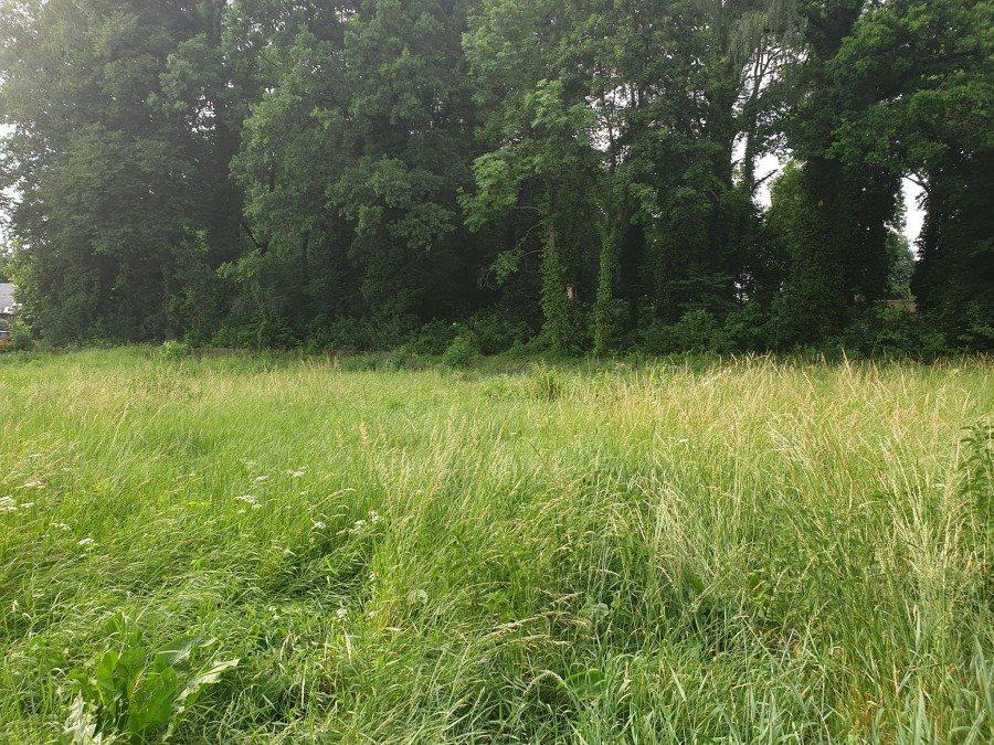 Działka rolna pod dzierżawę Chojna  2013m2 Foto 4