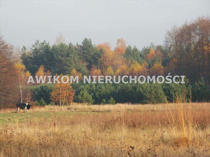 Działka rolna na sprzedaż Skierniewice, Borowiny  35900m2 Foto 1