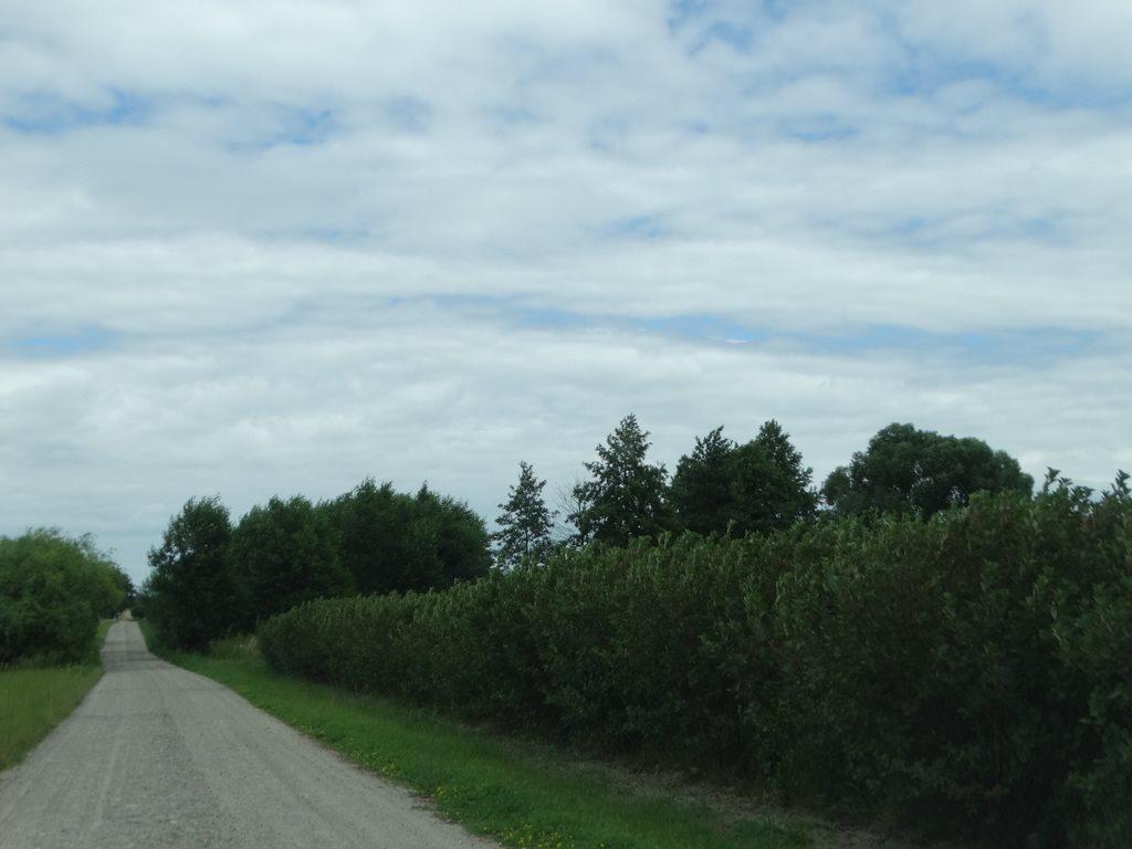 Działka rolna na sprzedaż Skrobów  10600m2 Foto 5