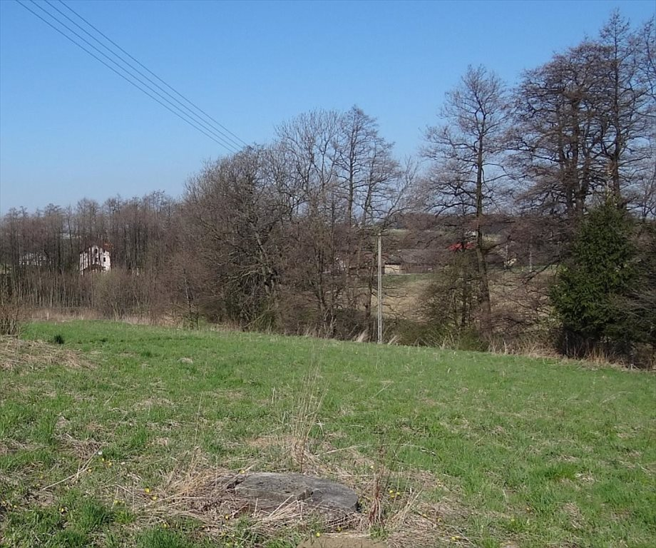 Działka siedliskowa na sprzedaż Międzyświeć  12100m2 Foto 4