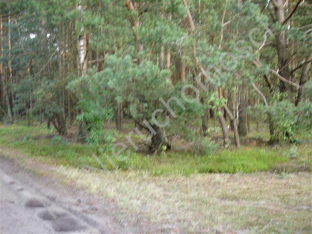 Działka leśna na sprzedaż Ołdakowizna  7774m2 Foto 1