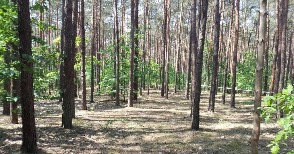 Działka budowlana na sprzedaż Sękocin-Las  2140m2 Foto 2