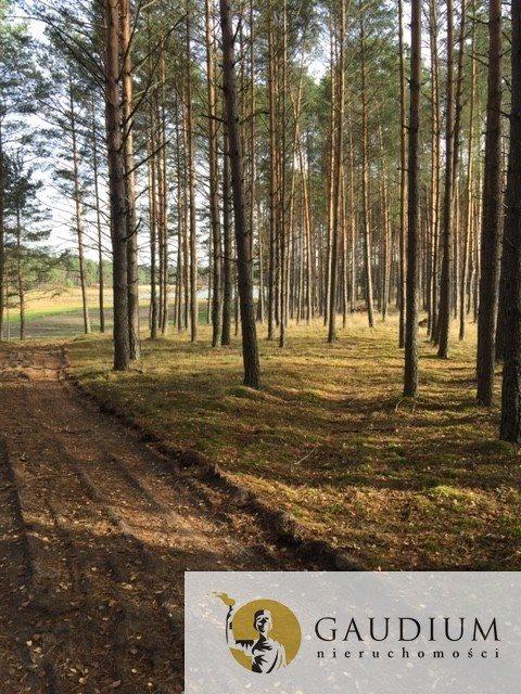 Działka leśna na sprzedaż Klocek  60000m2 Foto 2