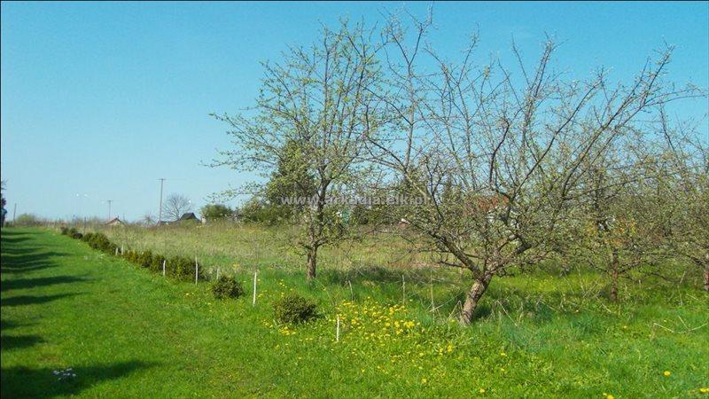 Działka rolna na sprzedaż Konieczki  2400m2 Foto 4