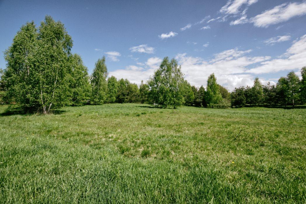 Działka siedliskowa na sprzedaż Graniczna Wieś  10072m2 Foto 4