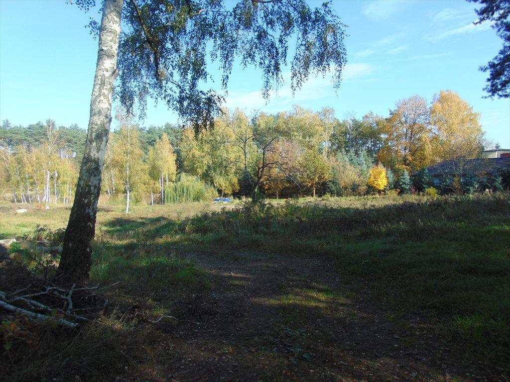 Działka komercyjna na sprzedaż Jerzykowo, Sosnowa  11700m2 Foto 7