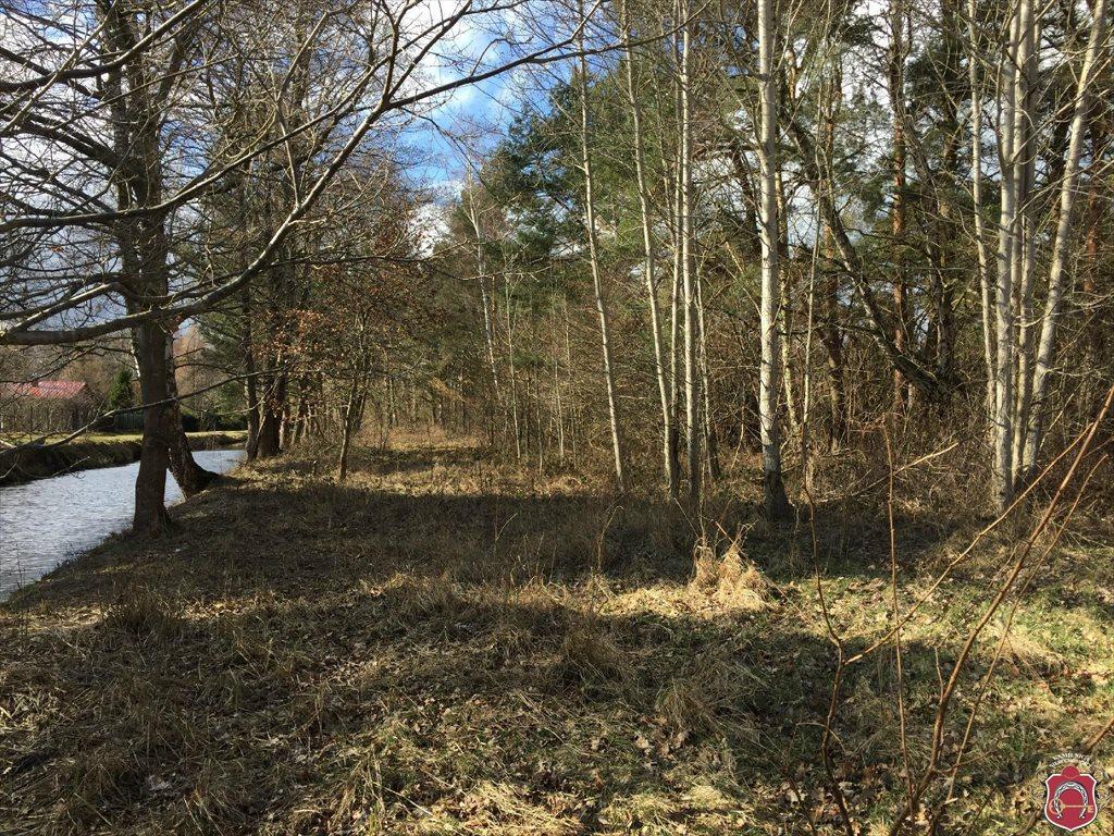 Działka leśna na sprzedaż karwieńskie błota, Piaskowa  1349m2 Foto 10