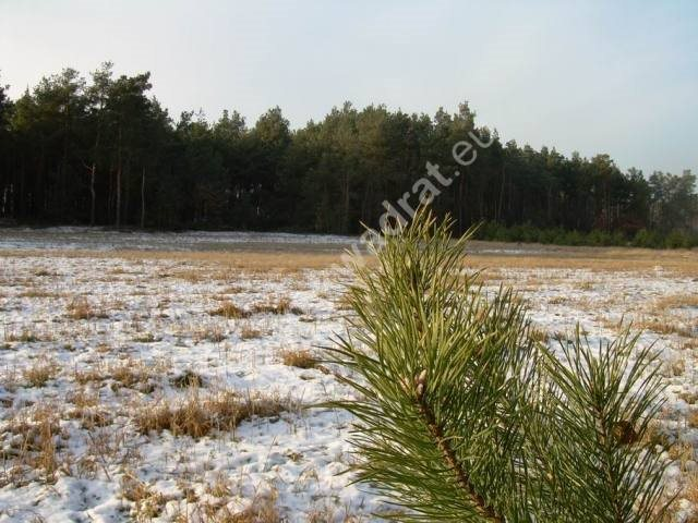 Działka rolna na sprzedaż Stanisławów  3000m2 Foto 10