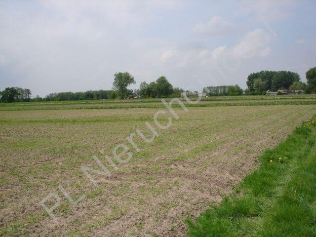 Działka rolna na sprzedaż Holendry Baranowskie  15700m2 Foto 6