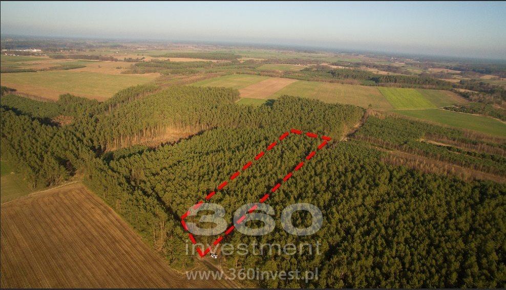 Działka leśna na sprzedaż Słonów  10800m2 Foto 1