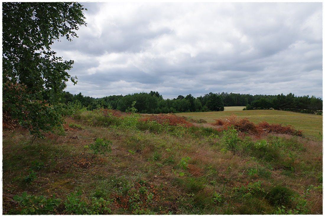 Działka rolna na sprzedaż Linia, Dębowa  12607m2 Foto 2