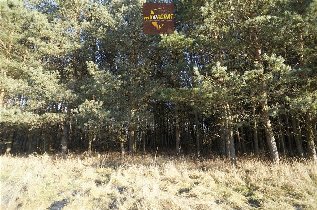 Działka leśna na sprzedaż Drygały  24200m2 Foto 5