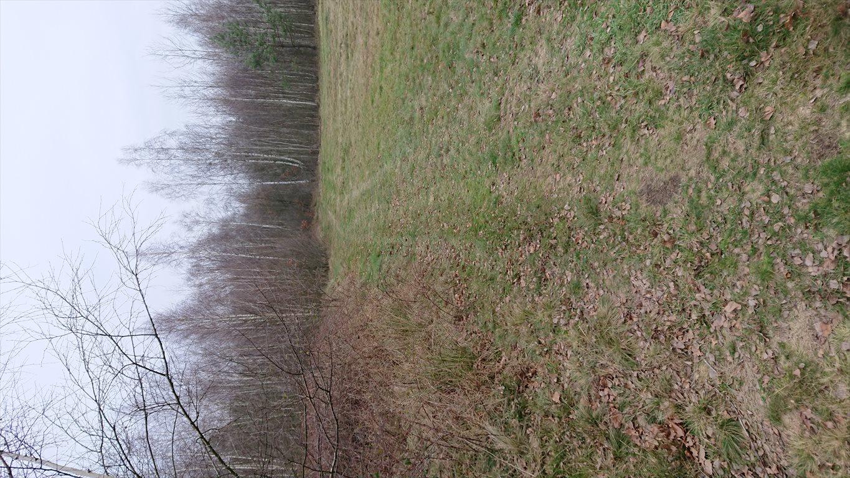 Działka rolna na sprzedaż Budy Michałowskie  12012m2 Foto 5