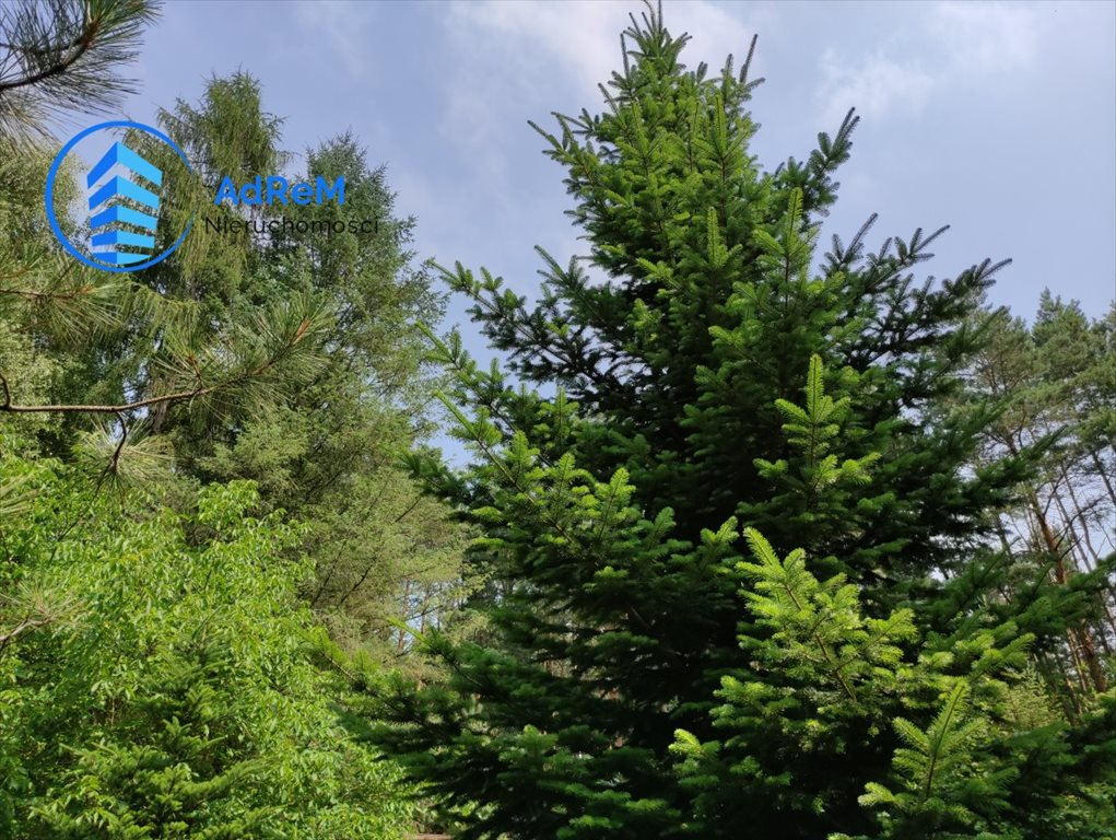 Działka leśna na sprzedaż Korzeniówka, Rysia  2356m2 Foto 7