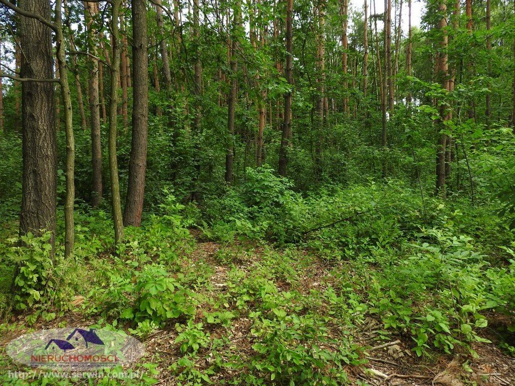 Działka leśna na sprzedaż Sieradza  7700m2 Foto 2