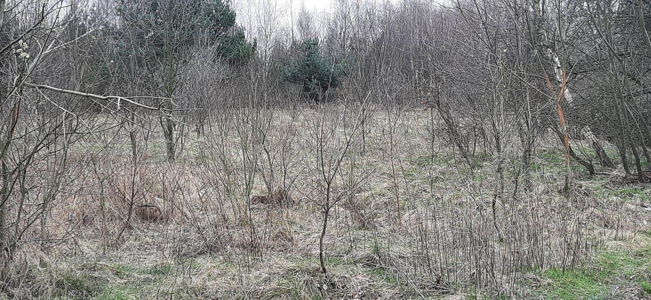 Działka rolna na sprzedaż Słubica-Wieś  3651m2 Foto 6