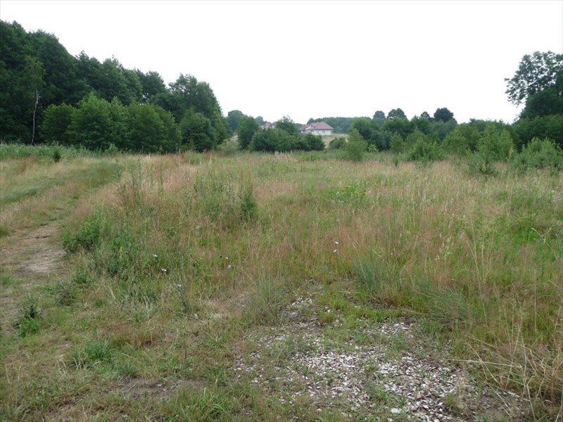 Działka rolna na sprzedaż Zielona Góra, Ochla  36500m2 Foto 2