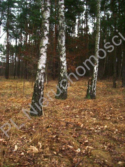 Działka leśna na sprzedaż Lesznowola  1918m2 Foto 8