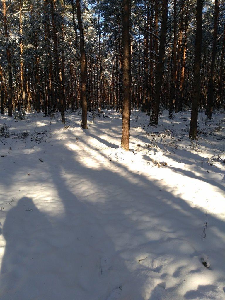 Działka leśna na sprzedaż Kuźnica  6100m2 Foto 4