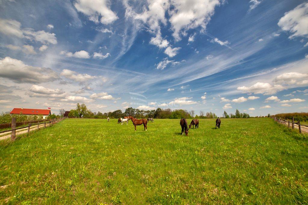 Działka rolna na sprzedaż Kazimierz Dolny, Wylągi  21600m2 Foto 9