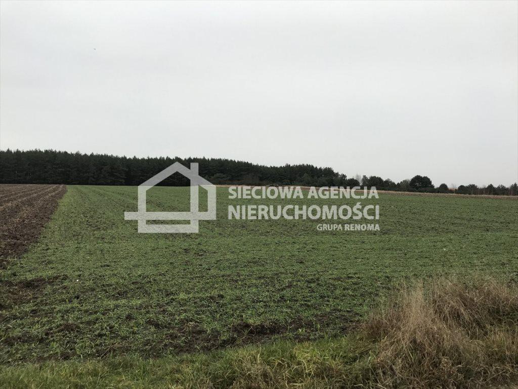 Działka rolna na sprzedaż Sasino  12100m2 Foto 5