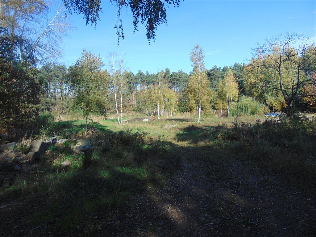 Działka inwestycyjna na sprzedaż Jerzykowo, Sosnowa  11700m2 Foto 1