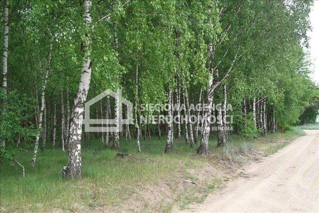 Działka leśna na sprzedaż Czarniż  44100m2 Foto 8