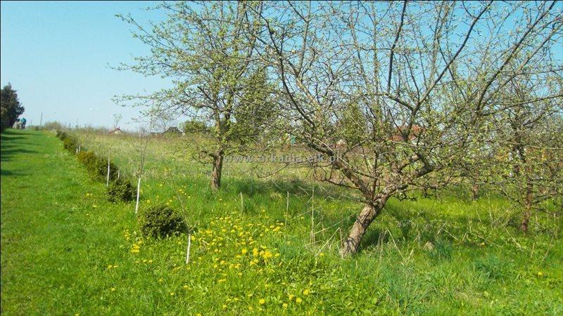 Działka rolna na sprzedaż Konieczki  2400m2 Foto 2
