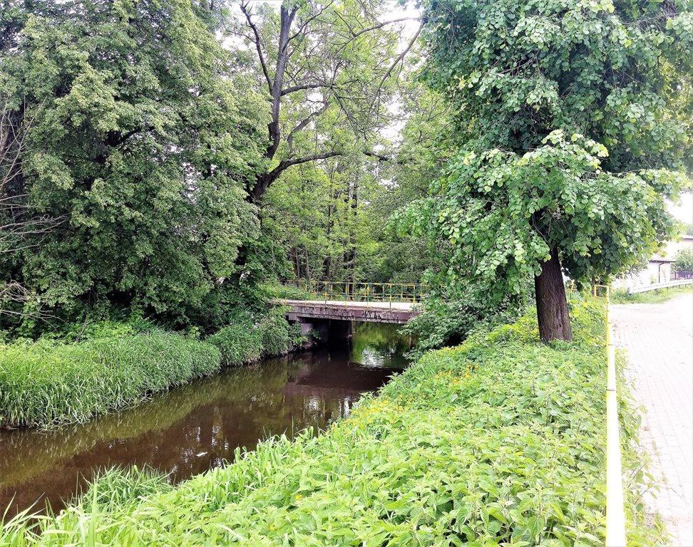 Działka leśna na sprzedaż Stary Kraszew  18100m2 Foto 5