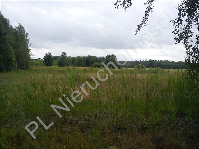 Działka rolna na sprzedaż Stanisławów  18000m2 Foto 8