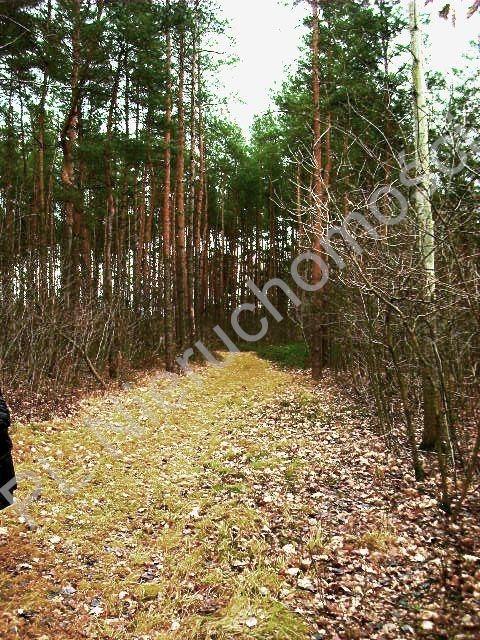 Działka leśna na sprzedaż Lesznowola  1918m2 Foto 10