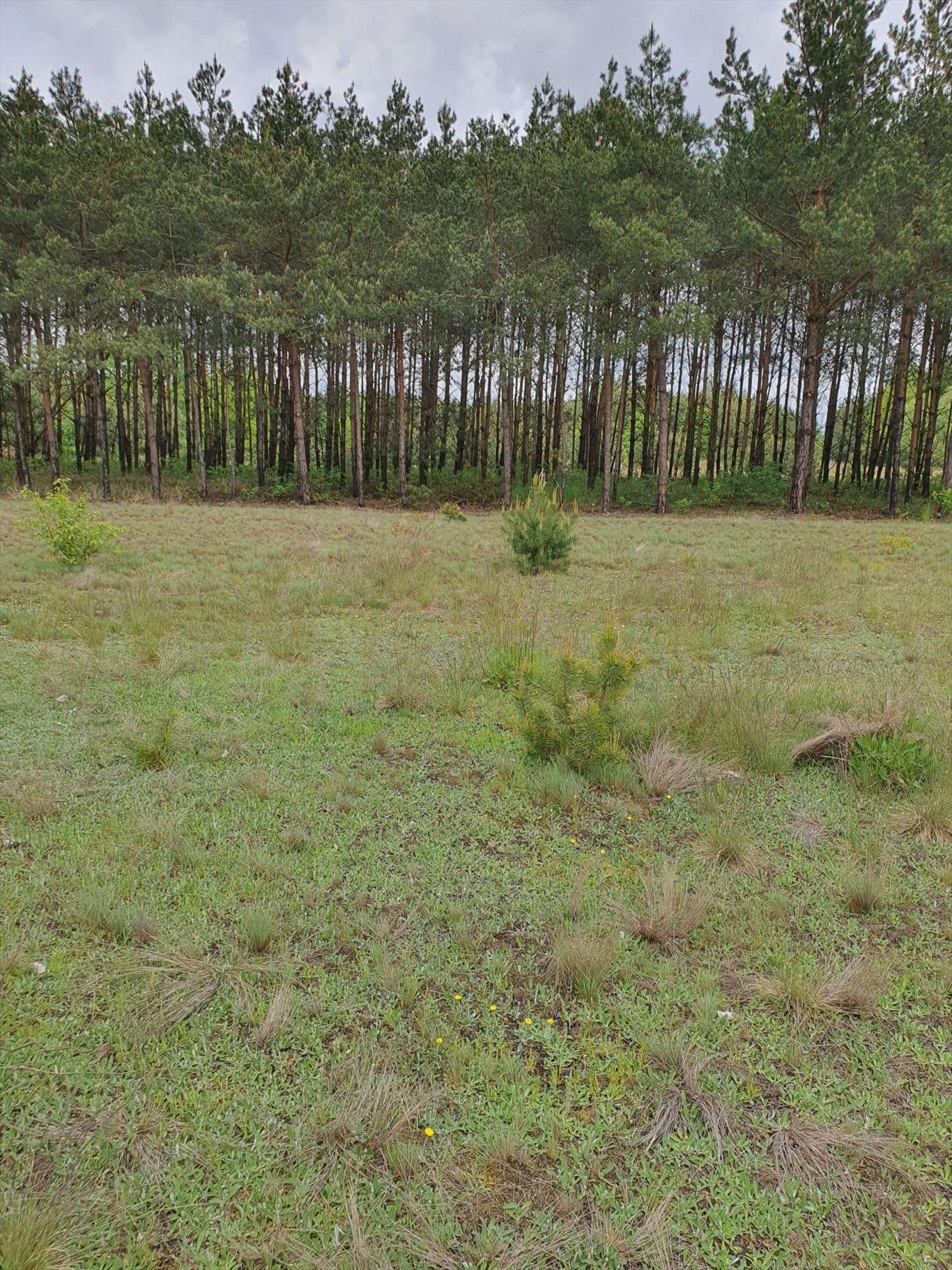 Działka rolna na sprzedaż Warszówka  12200m2 Foto 10