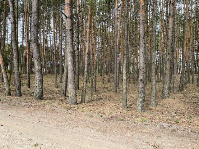 Działka leśna na sprzedaż Rządza  6198m2 Foto 2