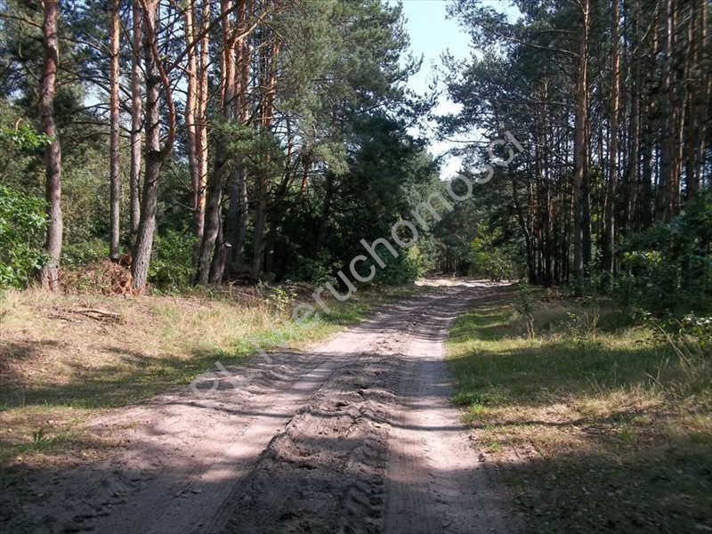 Działka rolna na sprzedaż Stanisławów  15500m2 Foto 5